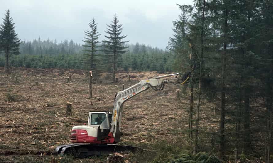 Vertical mulcher cutting trees