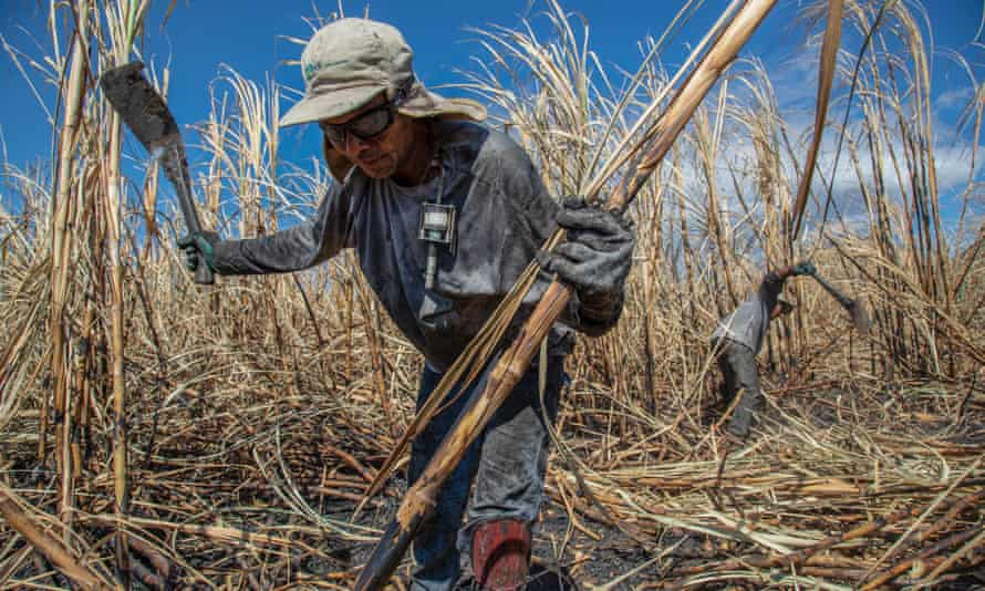 Sugarcane workers use dust monitors on their chests in Chichigalpa, Nicaragua
