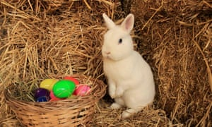 Rabbit at Vauxhall City Farm in London sat on a hay bale and next to a basket of chocolate eggs.