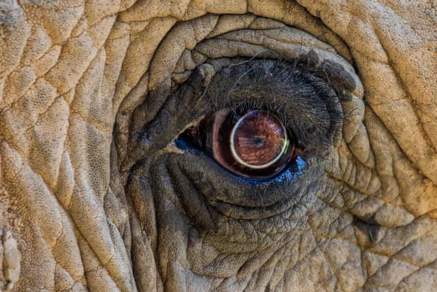 A close up of an eye of an elephant at the Elephant Sanctuary, Hohenwald, Tennessee
