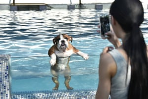 A young woman takes a picture of her pet bulldog as it climbs up on a glass panel