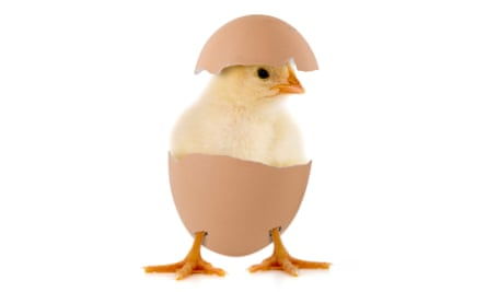 A chick in an egg