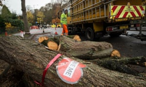 A tree is felled by an Amey contractor on Rustlings Road: three people were arrested for protesting.