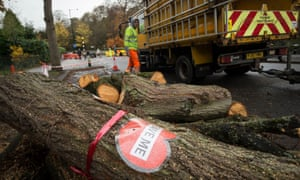 A sign on tree cut down by contractors in Sheffield.