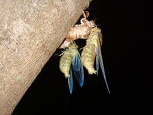 Special selection: Cicada ecdise By Naiara Pereira de Araujo