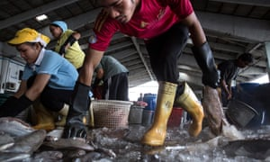 Thai workers help to sort fish after it was unloaded from a boat
