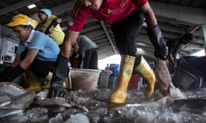 Workers help to sort fish