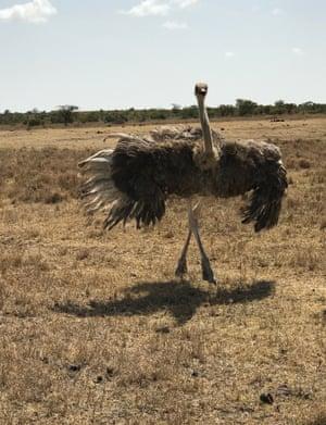 Kenyan ostrich by Hank Willis Thomas.