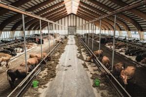 The dairy barn at Flatey farm