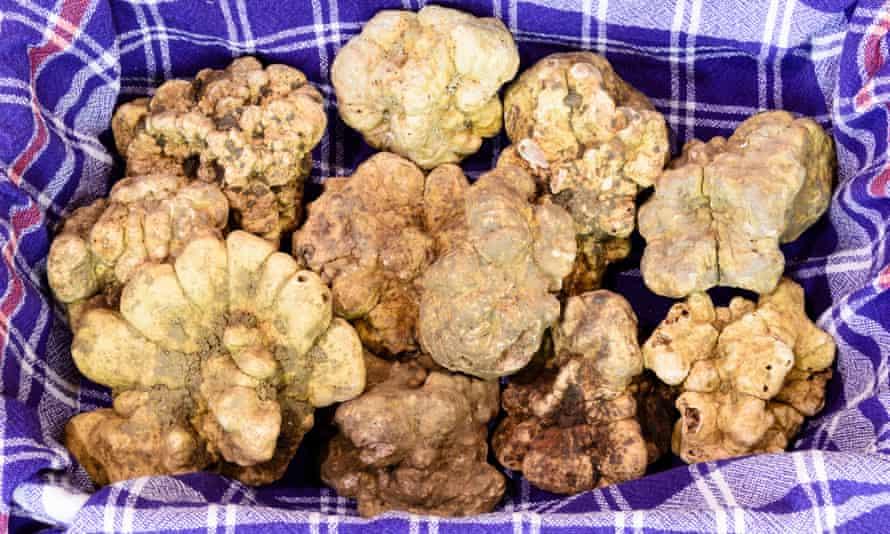 Fantastic white truffles