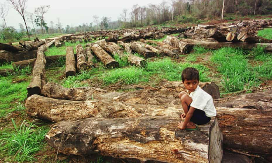 A young Cambodian sits atop one of countless logs piled in a forest.