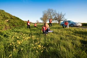 Botanical surveyors inspect roadside verges in Lincolnshire.