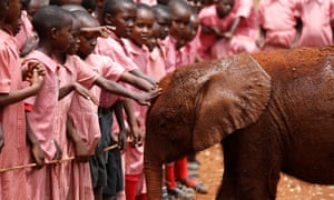 Pupils touch an orphaned baby elephant at the David Sheldrick Elephant Orphanage within the Nairobi National Park, near Kenya's capital Nairobi