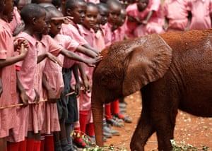 Pupils interact with an orphaned baby elephant at the David Sheldrick Elephant Orphanage near Kenya's capital Nairobi