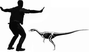 An artist's impression issued by the University of Portsmouth showing how a <em>Dracoraptorv hanigani</em> would measure up to Chris Pratt from Jurassic World.