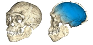 Two views of a composite reconstruction of the earliest known Homo sapiens fossils from Jebel Irhoud The braincase (blue) indicates that brain shape, and possibly brain function, evolved within the Homo sapiens lineage.