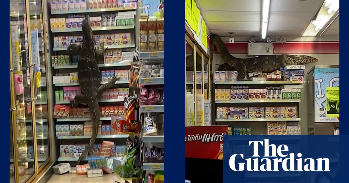 Giant lizard climbs shelves of Thai supermarket in search of food – video