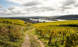 Balthasar Ress vineyards, Wiesbaden.