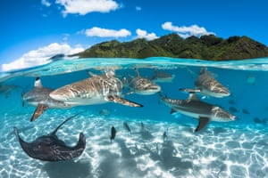 Wide-angle category third placeLagoon by Greg Lecoeur (France)'French Polynesia is an amazing place for nature lovers. In the lagoon of Moorea I was snorkeling with an abundance of marine life, most notably these black tip sharks. The topography of the mountains in the background inspired me to realise this half and half photo.'