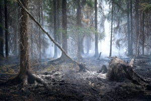 An area after a forest fire in Sweden