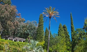"""Trees at the """"Domaine du Rayol"""""""