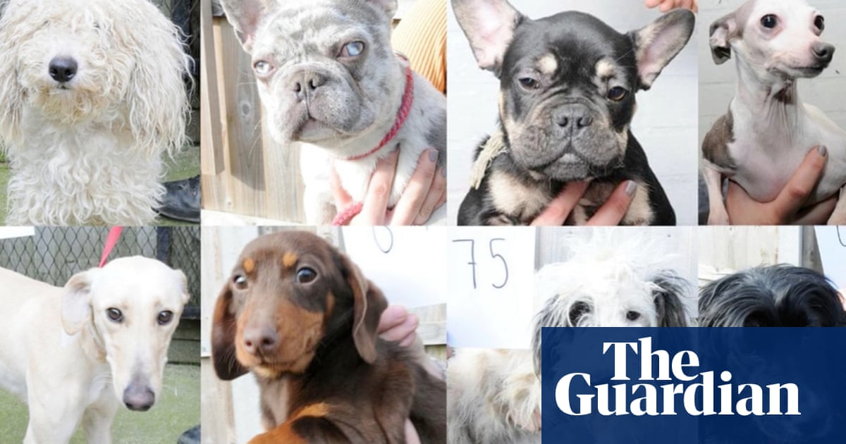 Stolen dogs in mugshot line-up as police try to locate owners