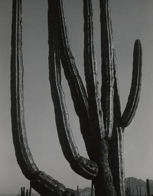 Cactus, Baja California, 1965