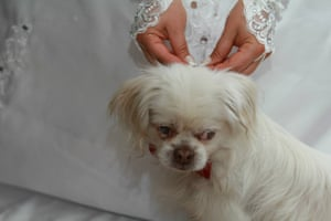 Liussa Kiani with Shaazdeh, a blind dog she adopted from Sanei's shelter in Iran.