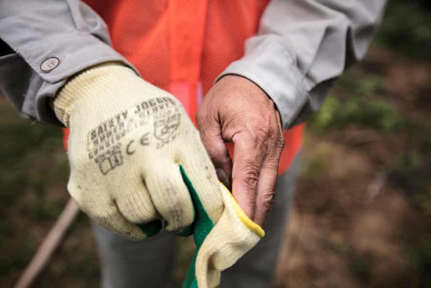 Ho Da The puts on safety gloves, required to meet the FSC certification standards.