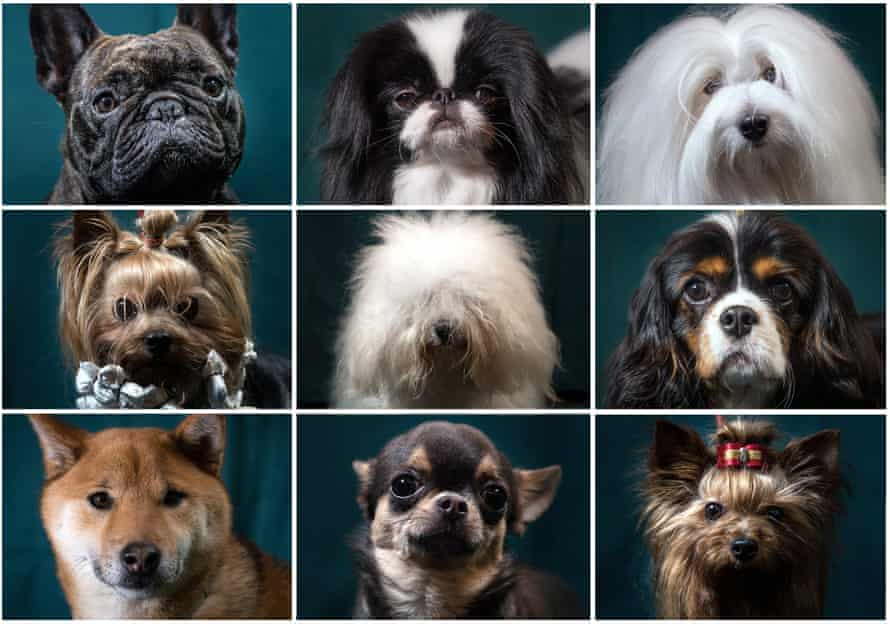 Of 161 dog breeds studied, 150 clustered into just 23 groups, largely defined by geographical location, physical attributes or skills.
