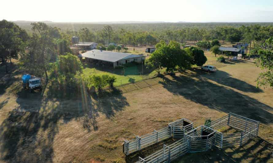 Artemis Station homestead, Cape York, has long been a stronghold of the threatened golden-shouldered parrot