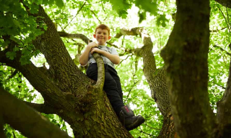 schoolboy in tree