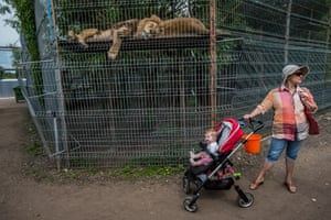 Lions, Lithuania 2016