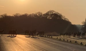 The view in Richmond Park at 6am.