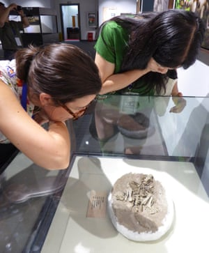Dr Simone Hoffman and Dr Fangyuan Mao examine a specimen in the public exhibition on early mammal fossils from China, in the Beijing Museum of Natural History.