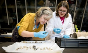 Jackie Keily (left) and Rebecca Redfern inspect a selection of bones