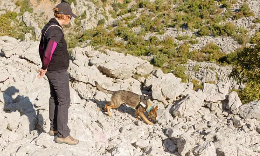 A dog searches the site, watched by its handler
