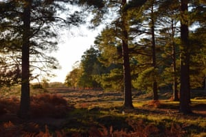 Gillian Thomas. New Forest national park