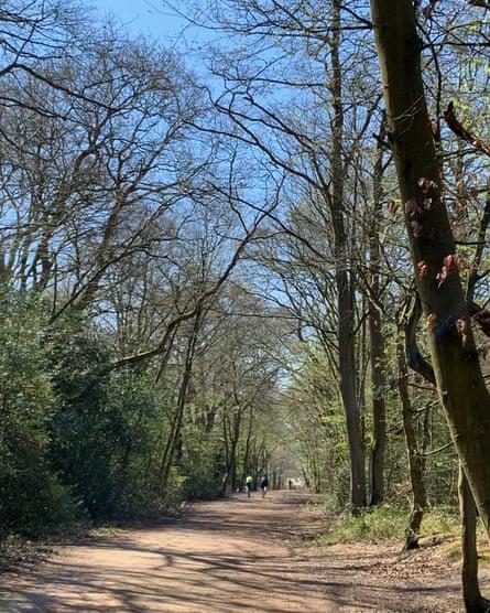 Epping Forest: um oásis de calma em meio à confusão do mundo exterior