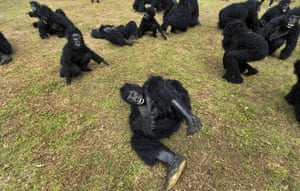Kinigi, Rwanda<br>People dressed in gorilla costumes entertain the crowd by at an annual baby gorilla naming ceremony.