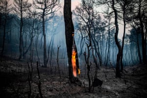 Makrimalli, Greece The trunk of a tree burns following a wildfire on the island of Evia, northeast of Athens