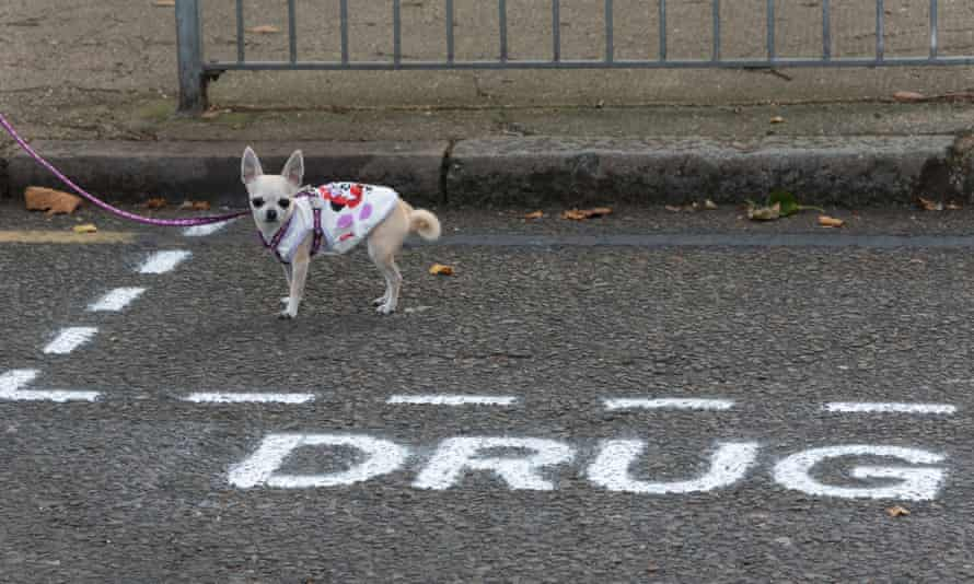 A dog stands in the spray painted 'Drug Dealer Only' parking space