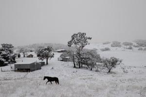 A horse walks through a white landscape