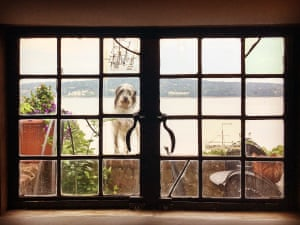 Delila July 2016I was staying with a friend in NewYork, and saw her dog watching us from outside
