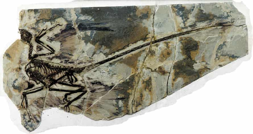 Microraptor gui from Liaoning province, northeastern China.