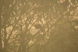An endangered hornbill