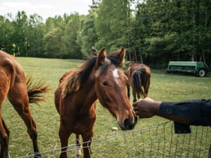 John Boyd Jr greets one of his four horses on his farm in Baskerville, Virginia, on 22 April 2019.