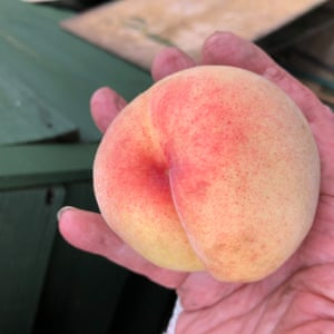 allotment fruit