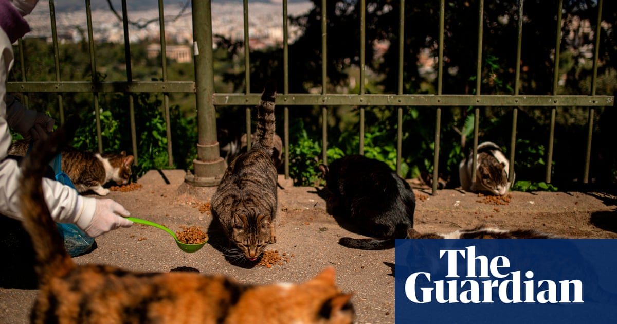 Greek plan for mandatory neutering to tackle strays hits opposition