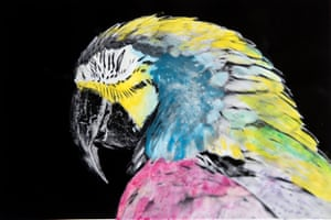 The parrot with its squinting eye half-open was the beginning of the project